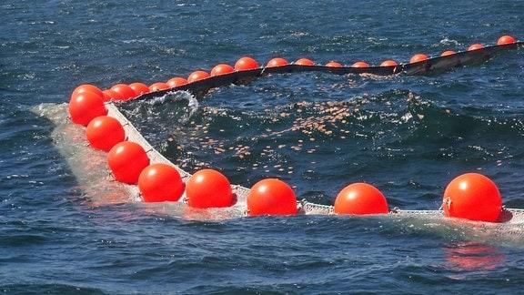 Quadratische Schnipsel schwimmen in einem Netz
