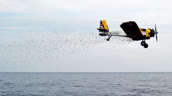 Flugzeug lädt Schnipsel über Wasser ab