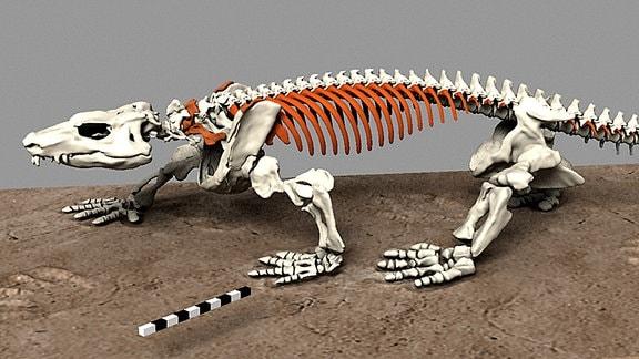 3D-Modell des Skeletts von Orobates