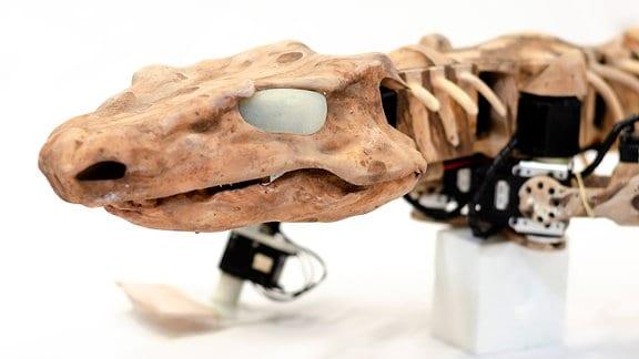 Großaufnahme des Kopfs des Orobots