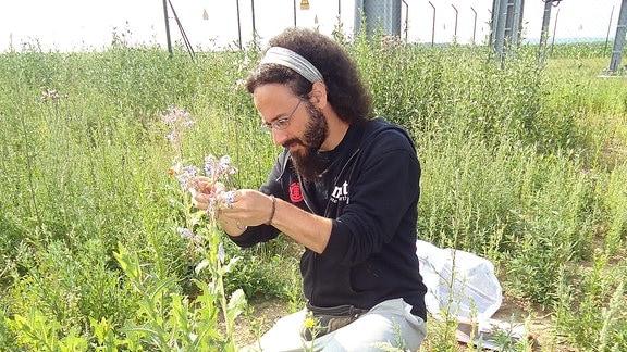 Dr. Panagiotis Theodorou untersucht eine Pflanze.