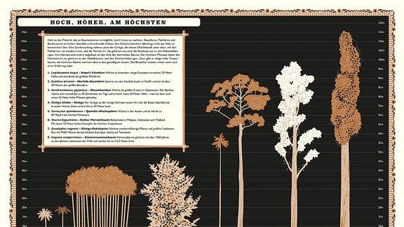 """Illustration in gedeckten Farben mit ästhetischen Zeichnungen: Vergleich verschiedener Baumhöhen mit dem Titel """"Hoch, höher am höchsten."""" Verglichen werden verschiedene Pflanzen von der Kokosplame bis zum Küstenmammutbaum, der mit 115 Metern fast sechsmal so groß wie die Kokospalme ist."""