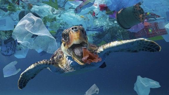 Eine Schildkröte schwimmt durch Plastikmüll