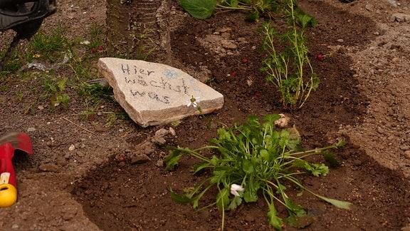Auf dem Bild ist ein Baumbeet zu sehen, also eine Baumscheibe, in die Wildblumen eingepflanzt wurden. Daneben ein Schild mit der Aufschrift: Hier wächst was