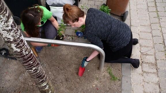 Zwei Frauen hacken den Boden um eine Baumscheibe auf