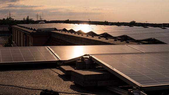 Im Licht der Abendsonne sieht man dutzende Solarmodule auf einem Dach eines Mehrzweckgebäudes.