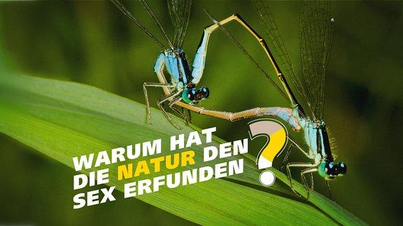 Zwei Libellen bei der Paarung. Schrift: Warum hat die Natur den Sex erfunden?