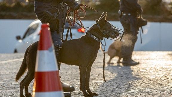 Polizei mit Polizeihunden im Einsatz.
