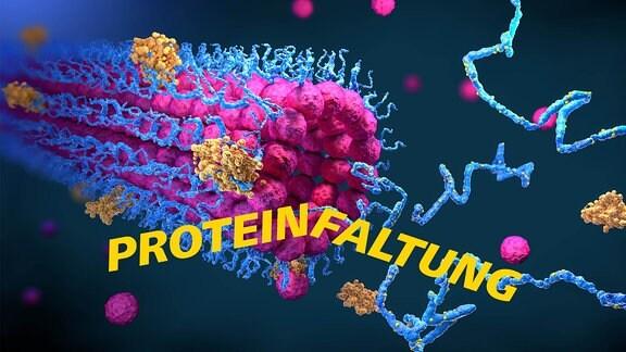 Eine Computergrafik zum Thema Proteinfaltung