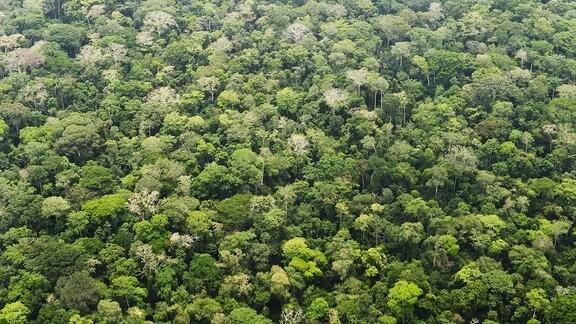 Regenwald im Dzanga-Nationalpark