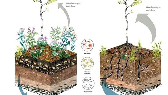 Eine Grafik mit zwei Bäumen und dem Boden unter ihnen - mit und ohne Regenwürmer