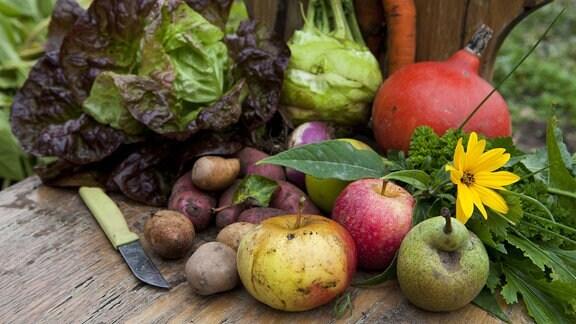 aktuelles Angebot für Mitglieder vom SpeiseGut Solidarische Landwirtschaft