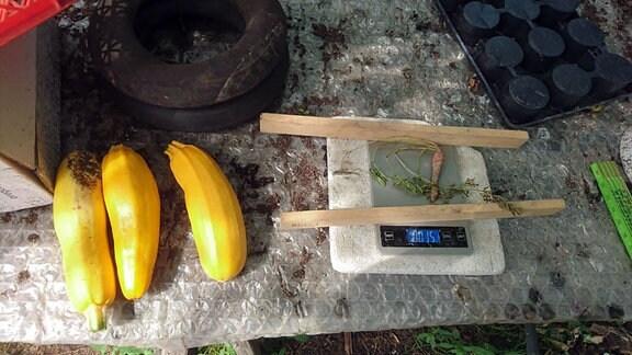 Gelbe Zucchini, daneben eine vertrocknete Möhre auf einer Küchenwaage