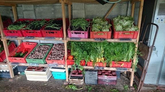 Geerntetes Gemüse und Kartoffeln in einem Holzregal