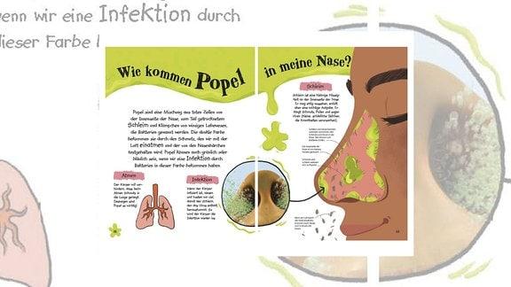 Erklärung in Grafiken, Fotos und Zeichnungen, wie Popel in die Nase kommen
