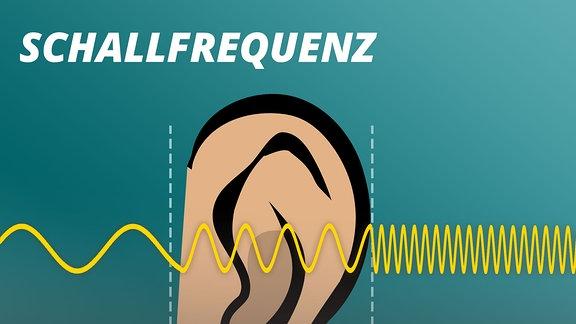 Grafik stellt vereinfacht eine Ton-Schwingung dar  mit langen Wellen für Infraschall, mittellangen für hörbaren Schall und kurzen Wellenabständen für Ultra- und Hyperschall. Dazu die Erklärung: Infraschall bis 16 Hertz, hörbarer Schall 16 Hertz bis 20 Kilohertz, Ultraschall 20 Kilohertz bis 1,6 Gigahertz, Hyperschall über 1 Gigahertz. Im Bereich hörbarer Schall is im Hintergrund ein großes Ohr als Grafik zu sehen.