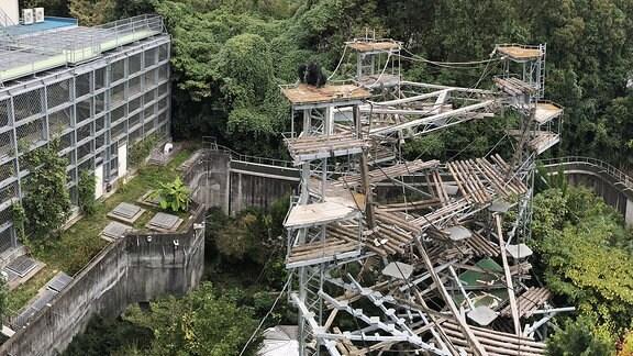 Das Schimpansengehege am Primatenforschungsinstitut der Universität Kyoto.