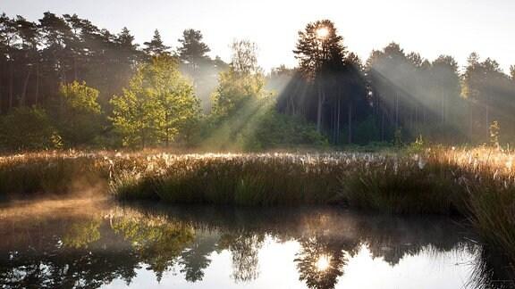 Naturschutzgebiet Bos en Heide bei Averbode in Belgien: Stimmung mit tiefstehender Sonne hinter Bäumen, etwas Nebel, ein Teich mit Schilf, warme, dunkle Farben.