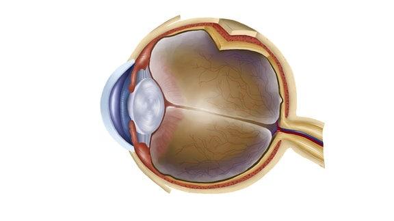 Grafik eines menschlichen Auges