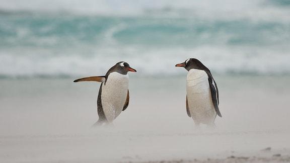 Der Pinguin - eine wegweisende Tierart Englischer Originaltitel: Directing penguin
