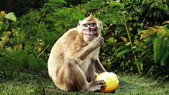 Das am Umriss ausgeschnittene Bild eines Affen auf einer Wiese vor Sträuchern.