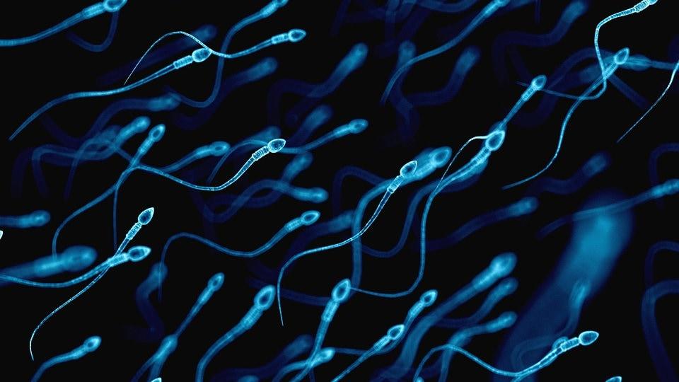 Spermidin hat einen Anti-Aging-Effekt - MDR