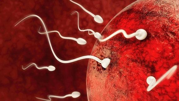 Illustration von Spermien an einer Eizelle