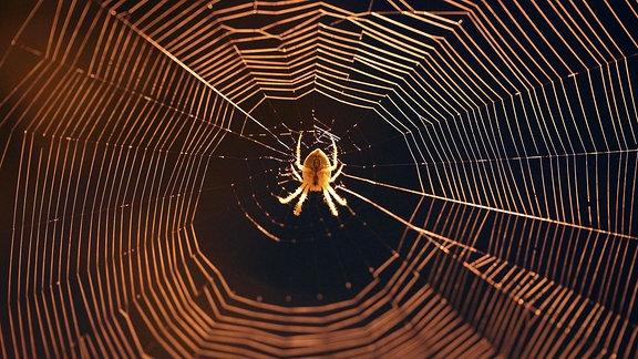 Gartenkreuzspinne (Araneus diadematus) im Netz hängend im Licht einer Laterne