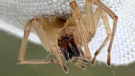 Eine Spinne.