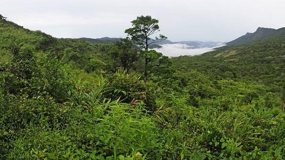Bewaldete Berglandschaft