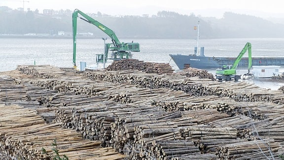 Stämme von Blauen Eukalyptus-Bäumen werden im Hafen von Ribadeo Galicien verladen