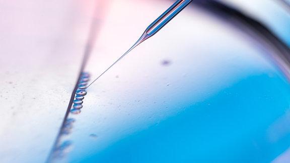Proben in einer Petrischale werden von einer Pipette aufgenommen