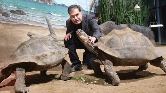 Ein Mann kniet zwischen den Sklulpturen  zweier großer Schildkröten
