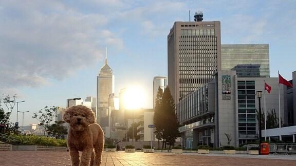 Ein Hund steht auf einem freien Platz in einer Stadt, im Hintergrund Hochhäuser in denen sich das Licht der untergehenden Sonne spiegelt.