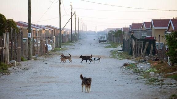Hunde auf einer verschmutzen Strasse.