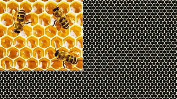 Bienenwaben als Bild und grafisch als Muster