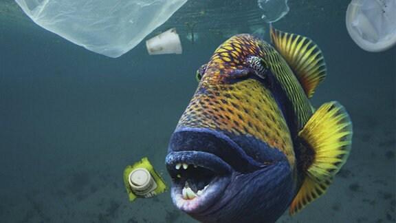 Titan Triggerfish schwimmt im Meer mit Müll.