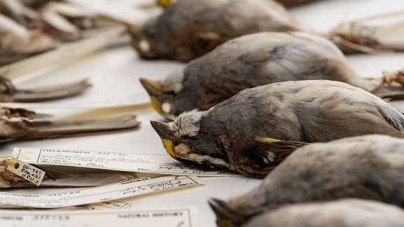 Tote Vögel mit Schildern liegen nebeneinander