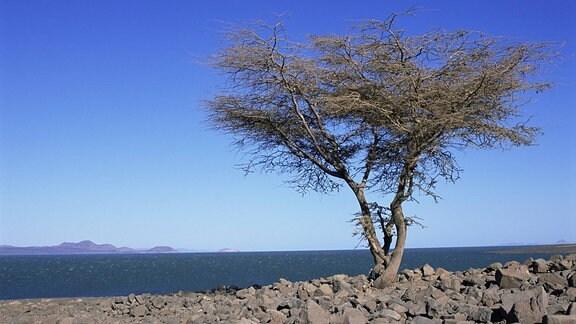 Turkana See