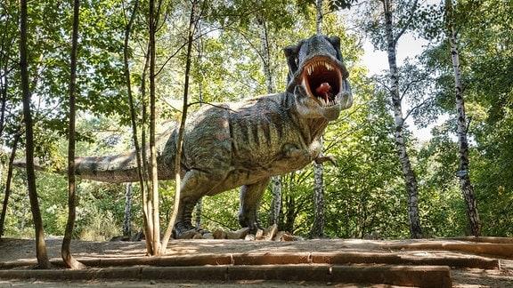 Ein Tyrannosaurus Rex