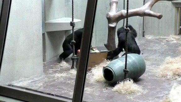 Zwei Affen im Gehäge. Aus der Studie - Wie Menschen kommunizieren auch Affen, um soziale Interaktionen zu beginnen und zu beenden (veröfffentlich am 11.08.2021).