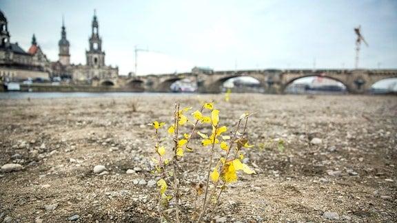 Trockenes Elbufer auf der Neustädter Seite. Im Hintergrund Hofkirche und Augustusbrücke.