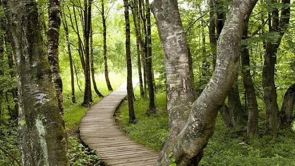 Holzweg durch das Schwarze Moor in der Thüringer Rhön