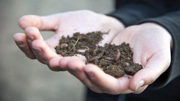 Hand hält Erde mit Regenwürmern