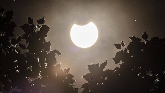 Eine partielle Sonnenfinsternis zeichnet sich ab hinter einem Baum in Berlin
