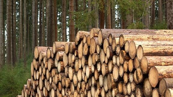 Gestapeltes Nutzholz in einem Wald