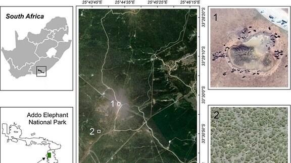 Grafiken zu Untersuchungsgebiet im Addo Elephant National Park in Südafrika