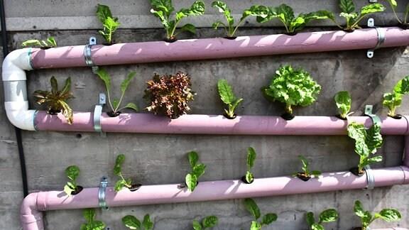 Pflanzen in Fallrohren als Teil eines Stadtgartens