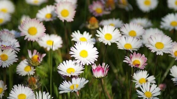 Eine Blumenwiese.