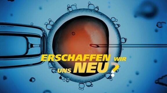 Mikroskopische Aufnahme: Eine Injektionsnadel steckt in einer Zelle. Schrift: Erschaffen wir uns neu?